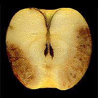 Hnednutie dužiny jabĺk